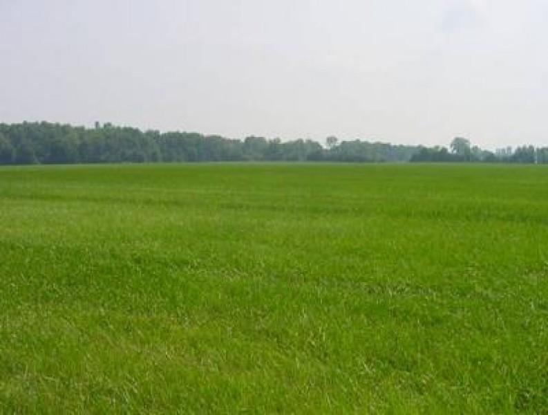 Terreno residenziale a Udine Rif.8030370