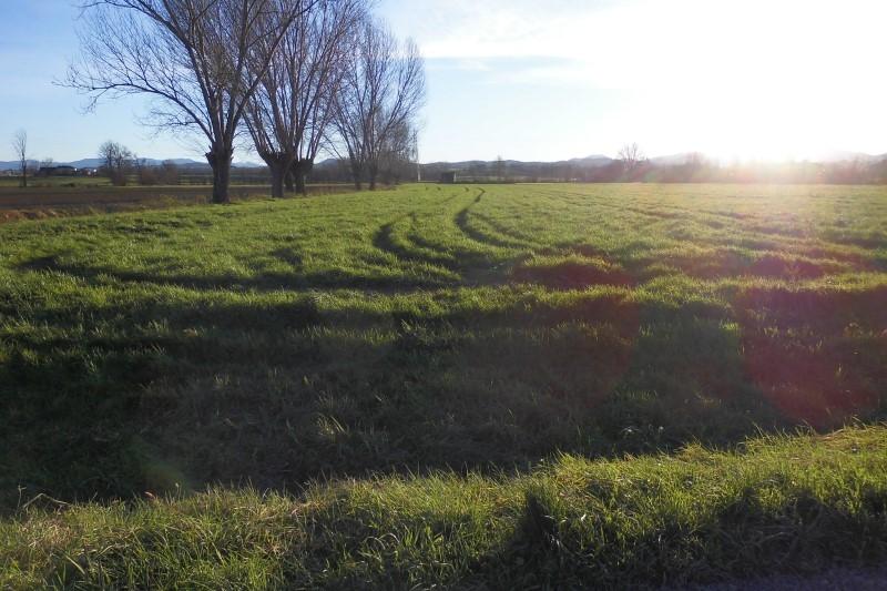 Terreno agricolo seminativo di 8 ettari Rif. 12126786