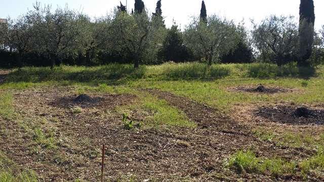 San Felice del Benaco vendesi terreno residenziale Rif. 11189643