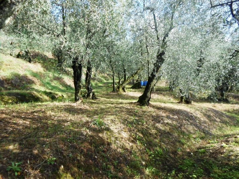 Terreno Agricolo in vendita a Buggiano, 9999 locali, zona Zona: Colle, prezzo € 32.000 | CambioCasa.it